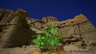 Glowing-Green-Bush-in-Canyon-at-Night-copy